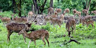 Bardia Jungle Safar